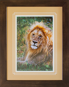 Framed Lion 5