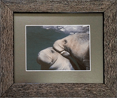 Small Framed Manatees