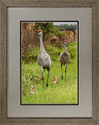 Framed Sandhills On Stroll 9 or 17