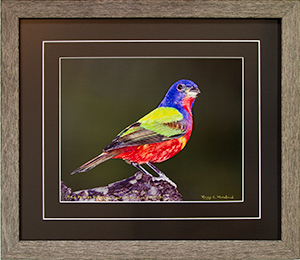 Framed Male Bunting 3