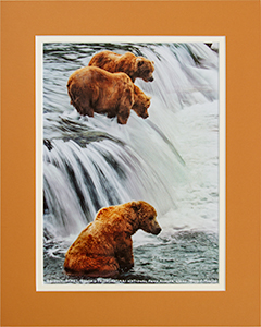 Matted Three Grizzlies 2