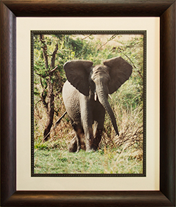 Framed Charging Elephant 2