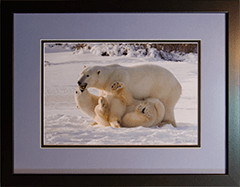 Framed Polar Playmates 3