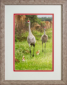 Framed Sandhills On Stroll 7