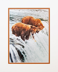 Matted Grizzlies & Salmon 2